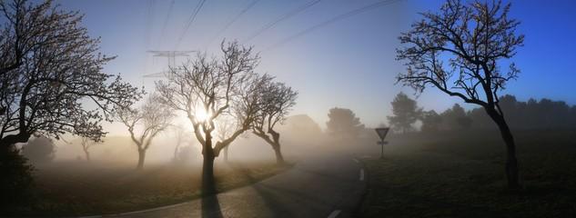 route le matin