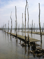 parc à huître du bassin d'arcachon