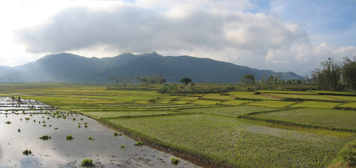 cara ricefields with cloudy sky, ruteng, flores, indonesia, pano