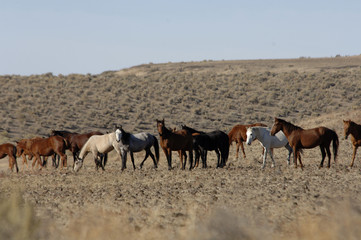 wild horses standing and feeding