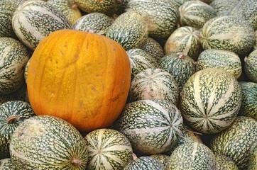 pumpkins amidst squash