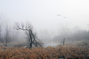 wetland spring