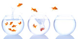 Fototapety goldfish splash