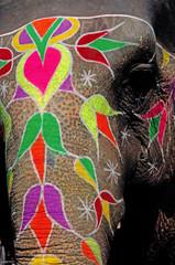 india, jaipur: painted elephant