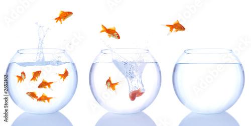 goldfish splash