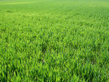 green field background, near to horizon poster