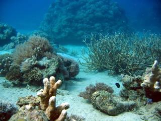 coraux à mayotte