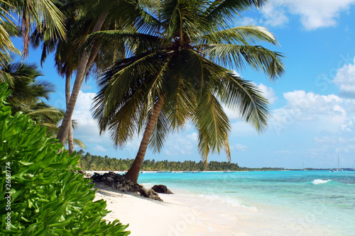 tropical island beach with palm trees