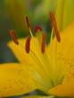 Fototapeten,pollen,gärten,herbst,sommer