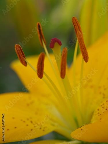 Fototapeten,pollen,garten,herbst,sommer