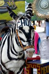 tijuana donkey