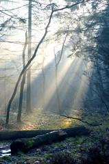 rayon de lumière en forêt 2