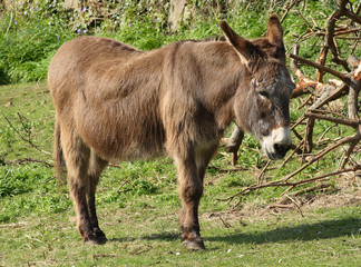 a donkey in a county field.