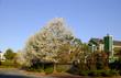 california house in spring
