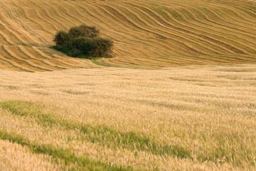 paysage de campagne 6