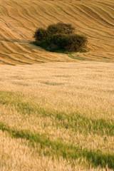 paysage de campagne 7