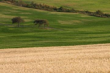 paysage de campagne 8