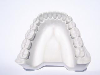 lower jaw