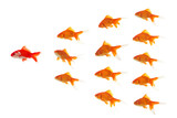 red goldfish leading poster