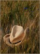 hat in field