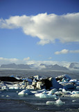 icebergs with the glacier in the distance poster