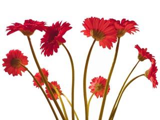 bouquet de germinis