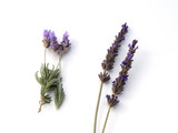 Fototapety english and french lavender