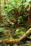 rainforest respite poster