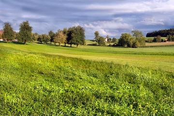 sunny grassland