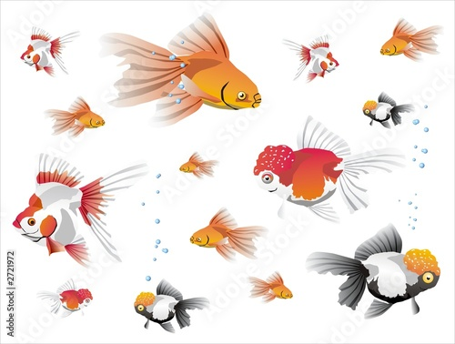 goldfish background