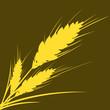 wheat (path)