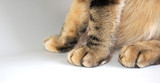 patitas de gato poster