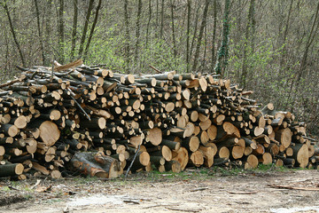 legno 5
