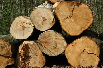 legno 7