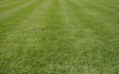 lawn of grass
