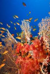 underwater view, coral reef