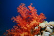 underwater view, coral reef, soft coral