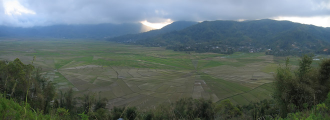 cara ricefields in circle pattern, ruteng, flores, indonesia, pa