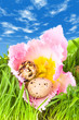 easter eggs in flower of pink tulip under a blue s