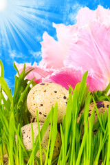 easter eggs in flower of pink tulip under a bright