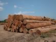 tropical timber