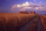 campo di grano e rudere poster