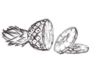 illustration of pineapple. sketch