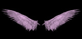 heaven pink wing . poster
