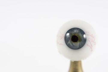 single eye on white background