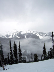 foggy blackcomb