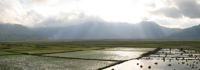 cara ricefields with sunlight trough the sky, ruteng, flores, in