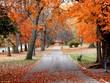 Leinwandbild Motiv tower grove autumn