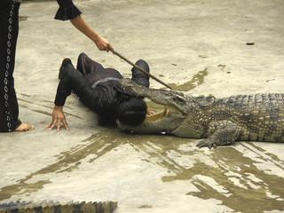 alligator show at halong bay, vietnam