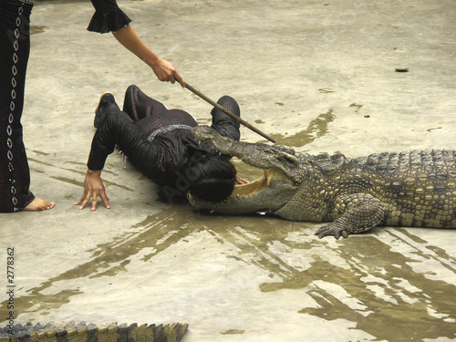 alligator show at halong bay, vietnam